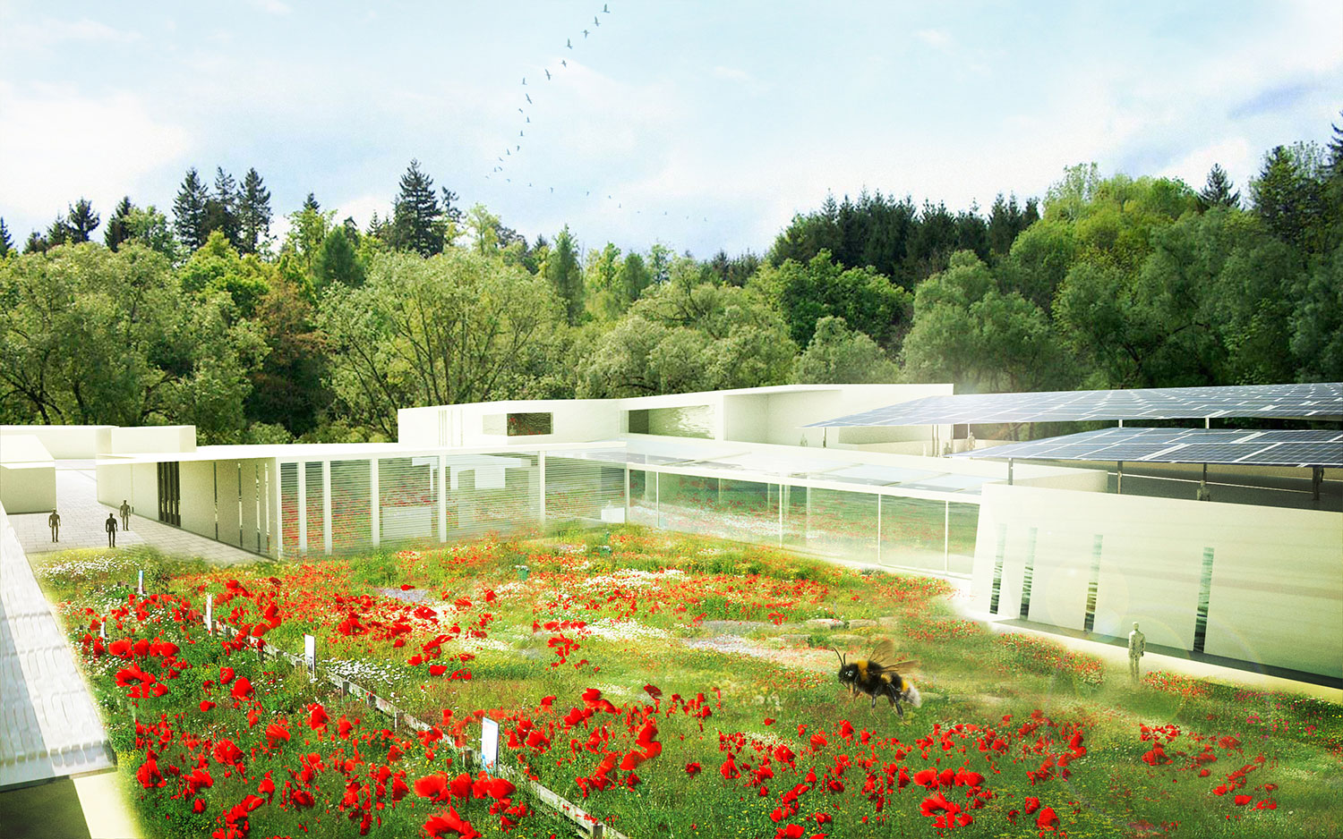 MCA-Papaver-Wildflower-center-nursery.jpg