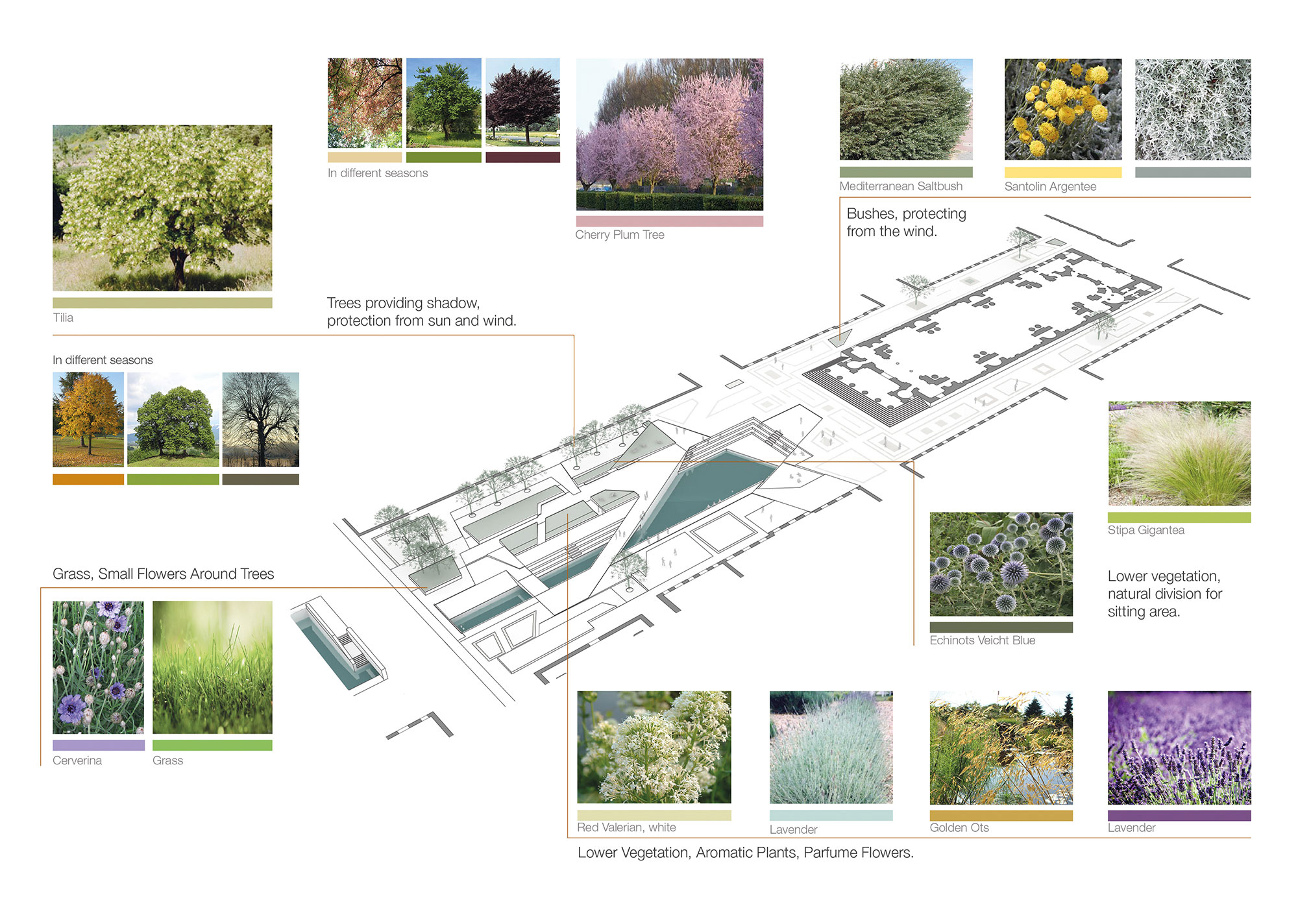 MCA_Sant Antonio Musicale_Vegetation diagram